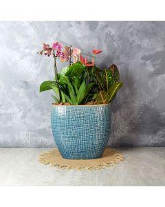 Hillcrest Floral Tropical Garden, floral gift baskets, gift baskets, succulent gift baskets