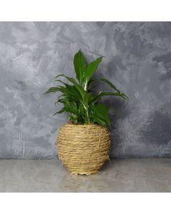Oakridge Cast Iron Plant Gift, floral gift baskets, gift baskets, succulent gift baskets