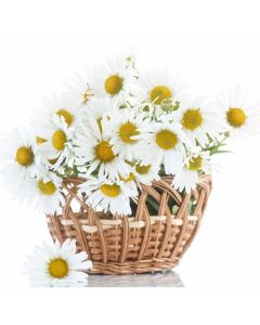 Forever Young Daisy Basket