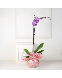 Orchid and Vase, floral gift baskets, Valentine's Day gifts, gift baskets, romance