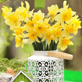 Flower gifts Saint Vladimirs