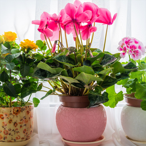 Our Potted Plants Gift Ideas for Friends